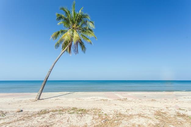 ビーチでココナッツの木