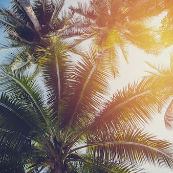Coconut tree at tropical coast with vintage tone