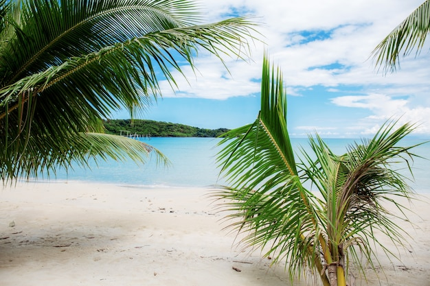 Coconut tree on beach in island.