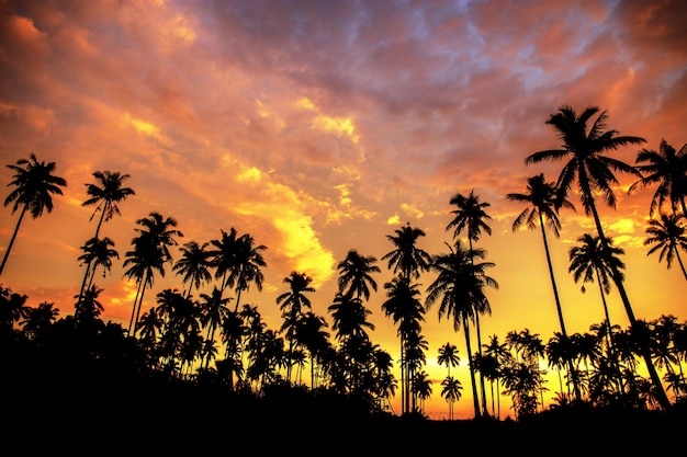 Coconut tree on beach at the sunset.
