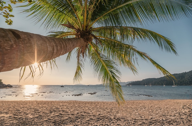 Coconut tree on the beach in tropical sea