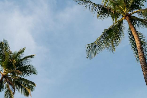 열대 섬 바다 해변 개념에 휴가를위한 구름 푸른 하늘과 코코넛 나무 잎