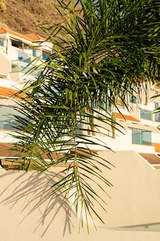 Coconut tree leaf with houses on background