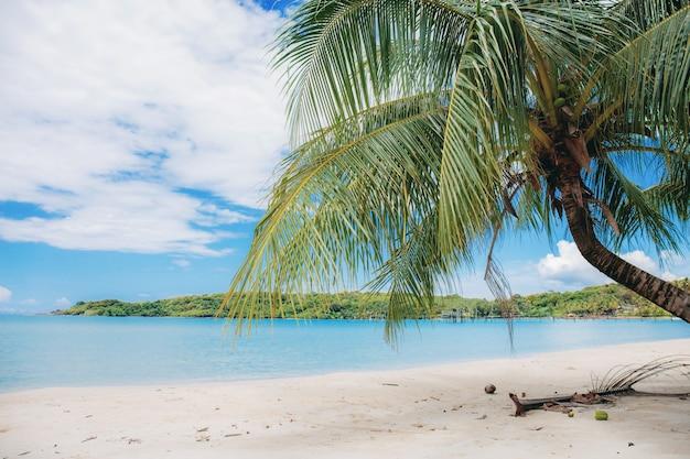 Кокосовая пальма на пляже.