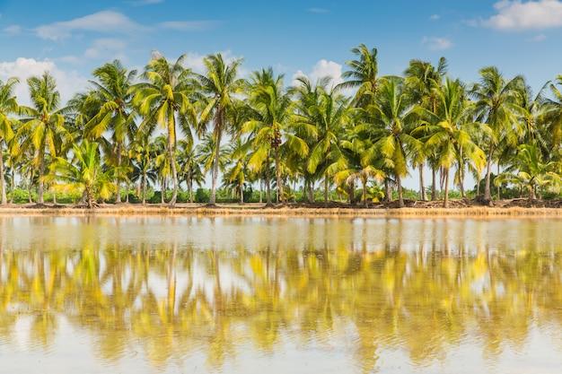 青い空にココナッツの木