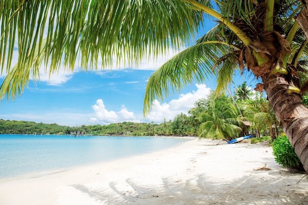 Coconut tree on sand at the sea in thailand.