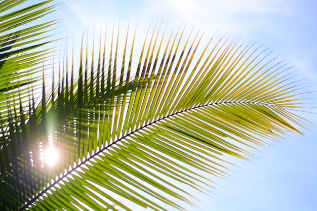 Coconut tree in summer with sky background
