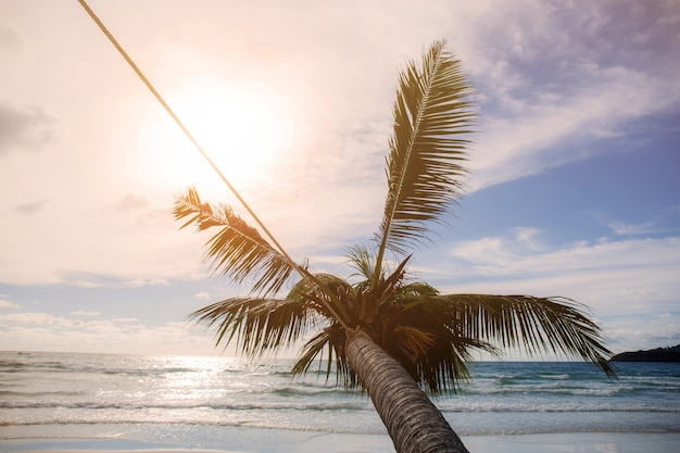 Coconut tree at sunset.