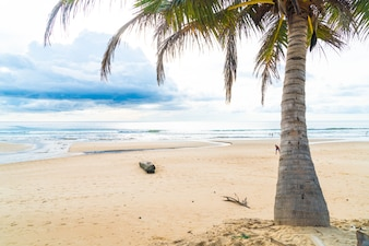 Coconut tree with tropical beach