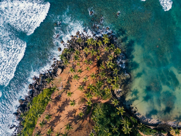 Coconut trees hill in mirissa