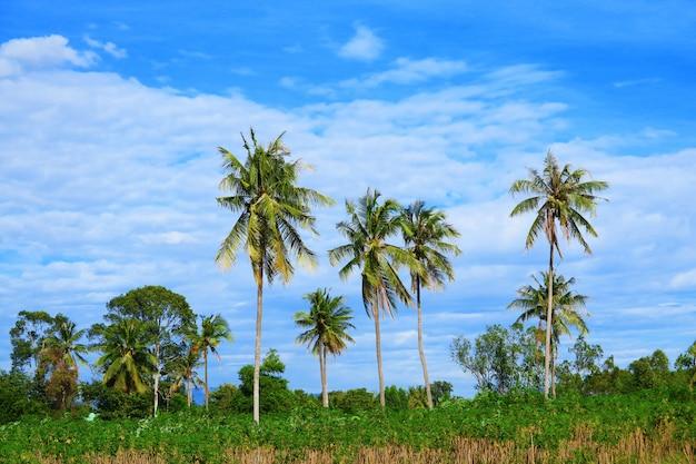 フィールドのココナッツの木と夏の青い空の白い雲