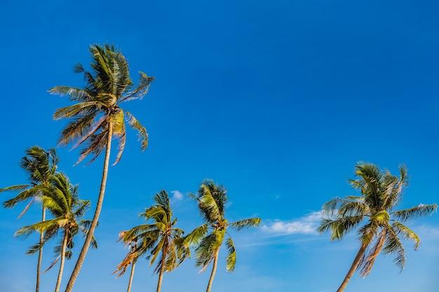 Кокосовые пальмы на пляже у моря на фоне голубого летнего неба с копией пространства.