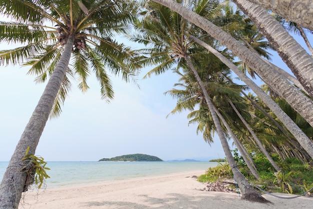 熱帯のビーチのココナッツの木