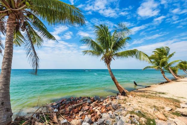 Coconut trees on a tropical beach