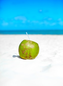 Coconut on white beach sand  near ocean on sunny summer day