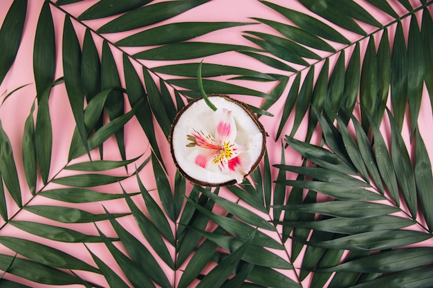Coconut with flower astroemeria around palm leaves on a pink background.