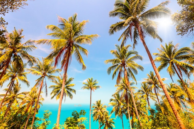 Coconuts palm trees and sea