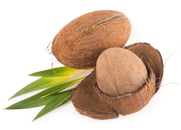 孤立した白い葉を持つココナッツ。