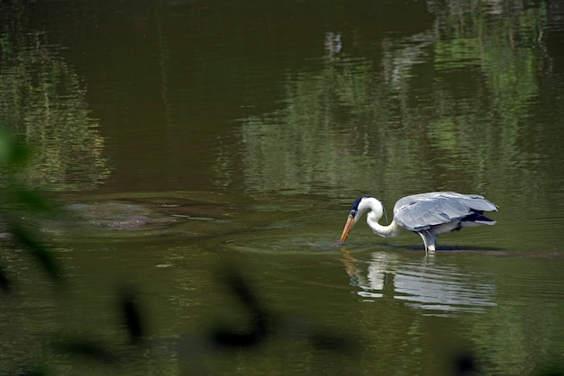 浅い湖でのcoco釣り