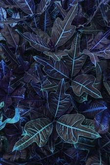 Тропический узор листьев в синем цвете растения codiaeum