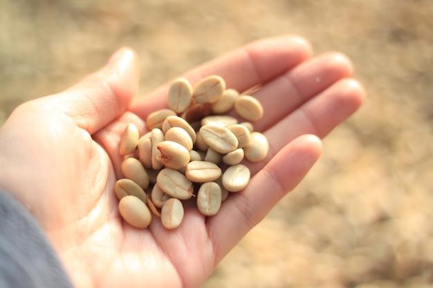 손에 커피 콩