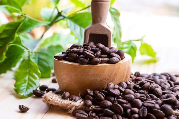 木製のボウルにローストしたコーヒー豆ミディアム。