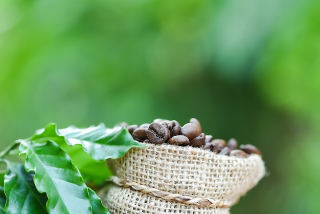 Coffee beans in bag roasted coffee in sack with green leaf on wooden table and nature