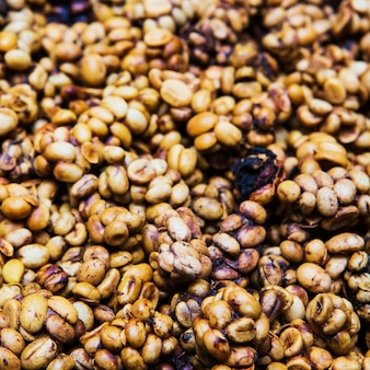 Coffee beans from the civet.