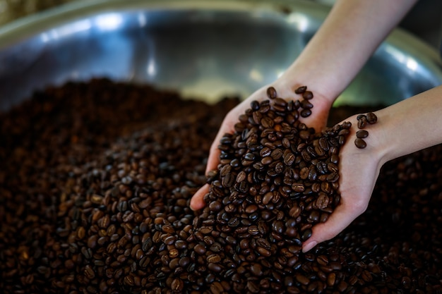 Coffee beans in hands being processed close up