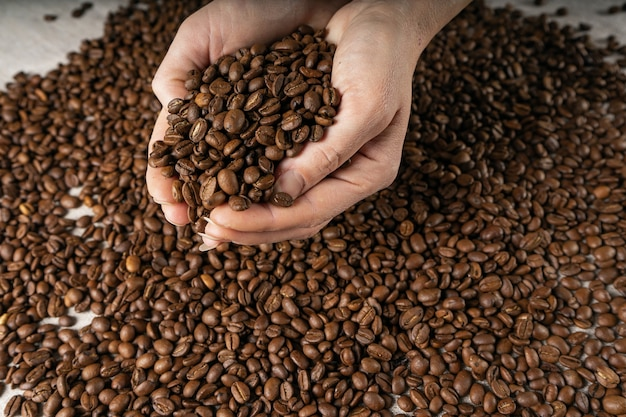 Coffee beans in hands. hands take a handful of coffee beans from burlap bag.