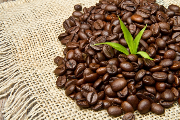 Coffee beans on jute canvas