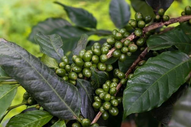 Кофейные зерна на дереве с мягким фокусом и чрезмерным светом на заднем плане