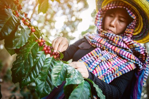 農場での木のコーヒー豆