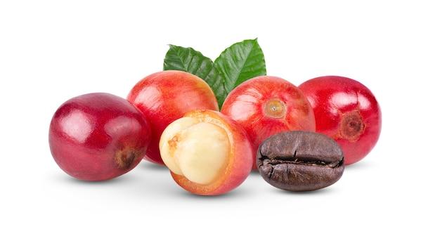 Кофейные зерна спелые и незрелые ягоды, изолированные на белом фоне
