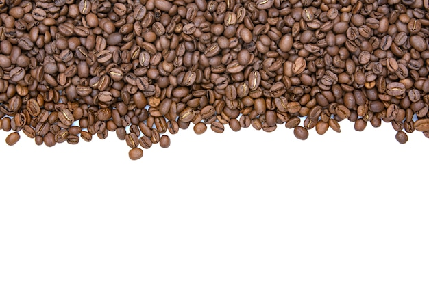 Coffee beans stripe isolated on white background. copy space for text.