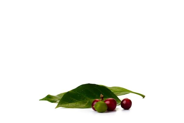 배너 디자인에 대 한 질감 흰색 배경에 잎 커피 콩