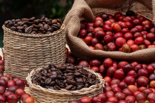 Coffee cherry and coffee beans