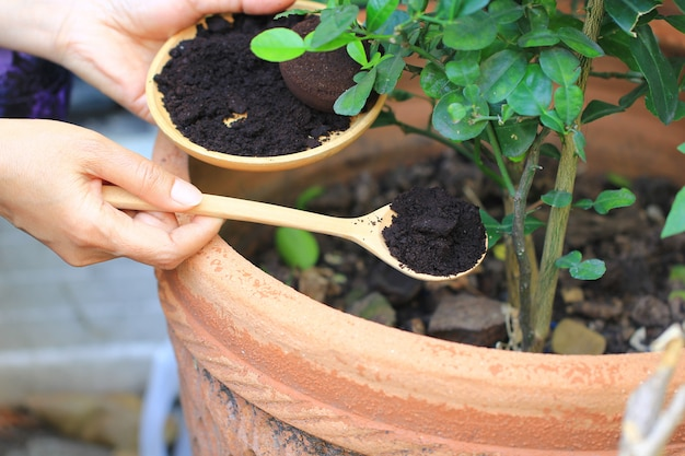 Кофе молотый, кофейный остаток наносится на дерево и является натуральным удобрением, садоводство, хобби