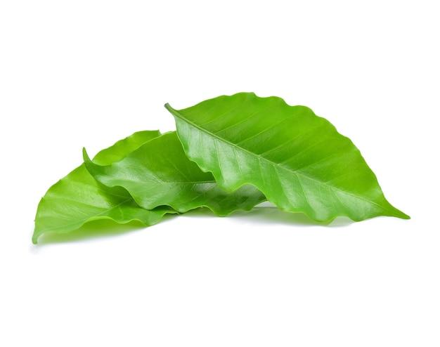 흰색 절연 커피 잎