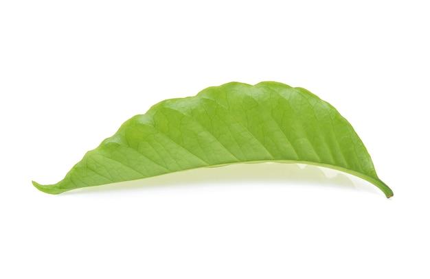흰색 배경에 고립 된 커피 잎