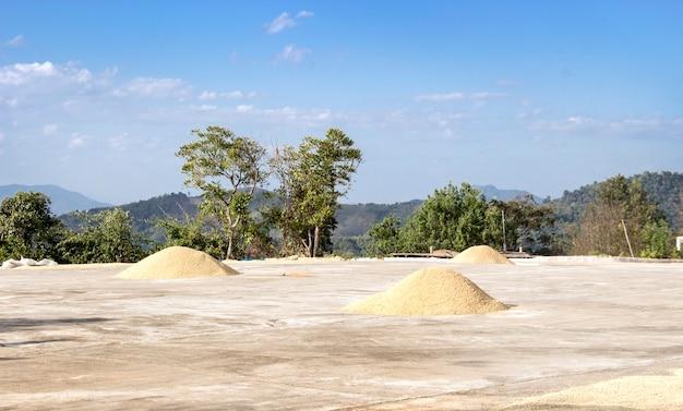 Кофейное зерно на земле для сушки на суше на севере таиланда