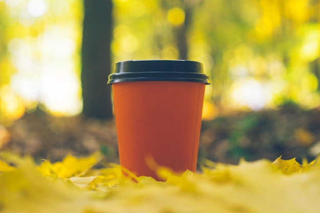 Coffee takeaway cups in an autumn foliage. outdoor coffee.