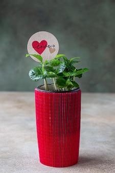 사랑 토퍼와 함께 빨간색 포장지에 꽃 냄비에 커피 나무. 사랑 또는 발렌타인 데이 개념.