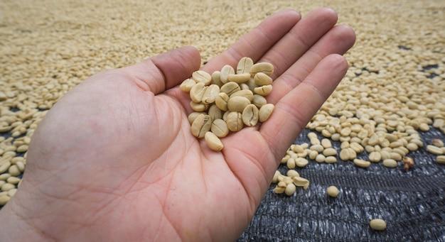 Coffee white bean from thailand