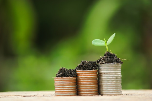 Coin and green growing plant on old wood tree bokeh background
