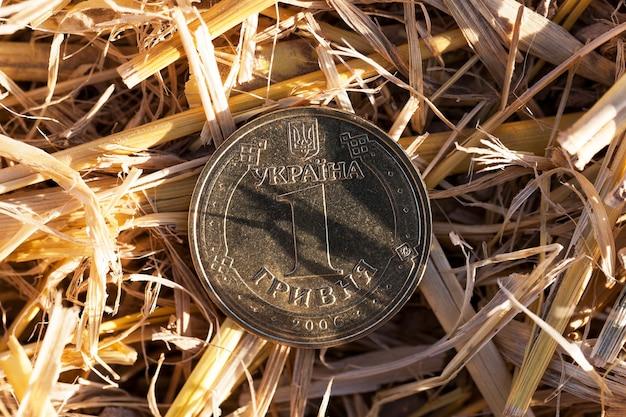 Монета в соломе - крупный план одной гривны в куче соломы, оставшейся после сбора урожая.