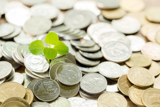 나무 테이블에 동전