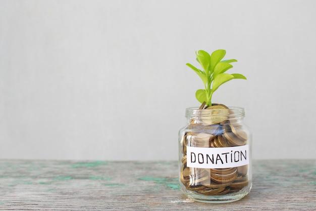 회색 배경에 기부금이 새겨진 유리 항아리에 동전과 녹색 새싹.