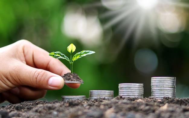 金融や銀行、お金を節約するためのアイデア、そして財政の増加のためにコインの上で成長する木を持っているコインと手。
