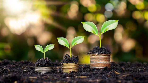 コインと植物は、金融と銀行のためにコインの山の上で育ちます。お金を節約し、財政を増やすという考え。